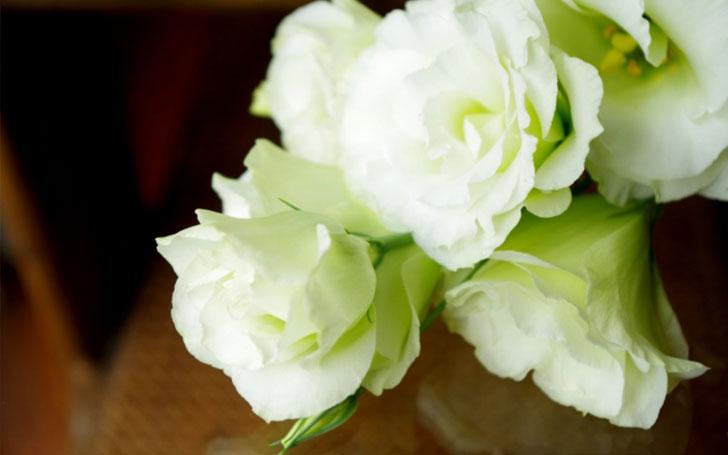 トルコキキョウは切り花にもおすすめ