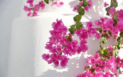 ブーゲンビリアの育て方。苗の植え付けの時期は?挿し木の方法は?剪定はいつ?