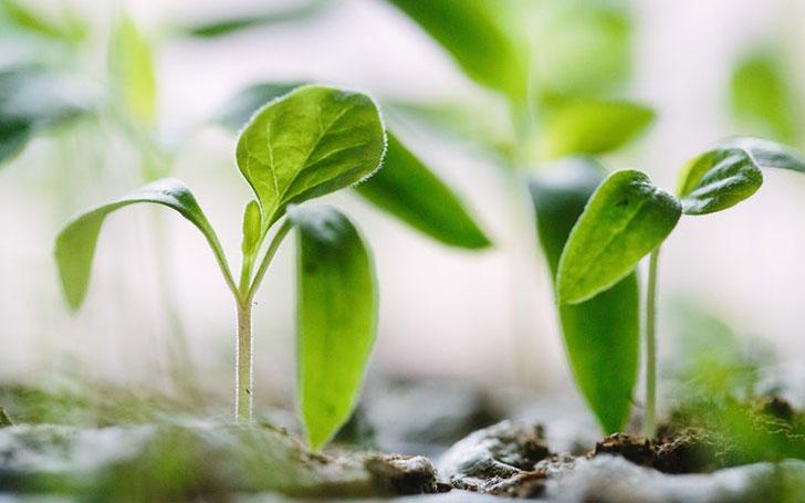 日なた・半日陰・日陰とは?植物を育てる上で大切な3つの栽培環境について。