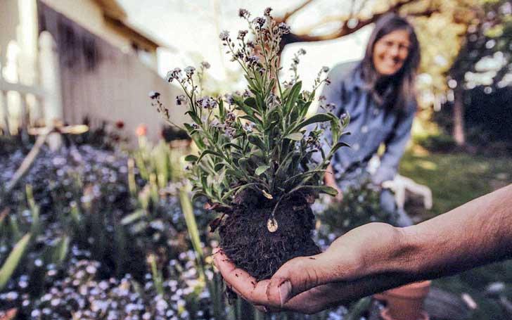 それぞれの植物に適した肥料を使い分けよう