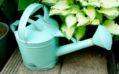 花の水やりのコツ!それぞれの季節(春夏秋冬)の水やりで気をつけたい事は?