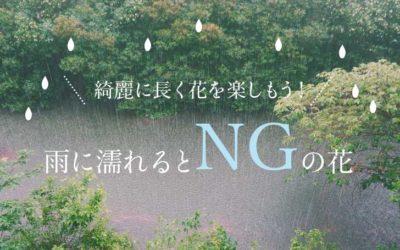雨に濡れるとNGの花5選!雨よけをして綺麗に花を咲かせよう