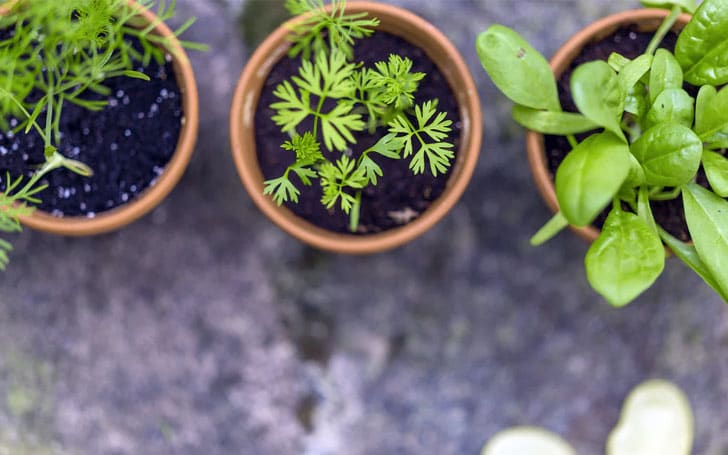 土の環境を整えて、元気に植物を育てよう