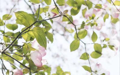 十二支(干支)は植物と関係があった!戌年は犬ではなく植物が枯れている状態?